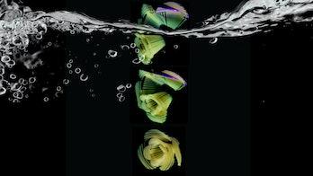 pasta flower morphing in water