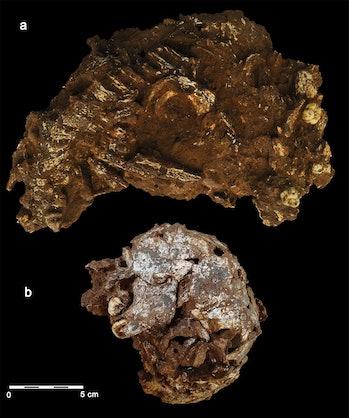 Skull and bones embedded in sediment