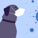 Illustration of dog and cat with face masks and Covid virus