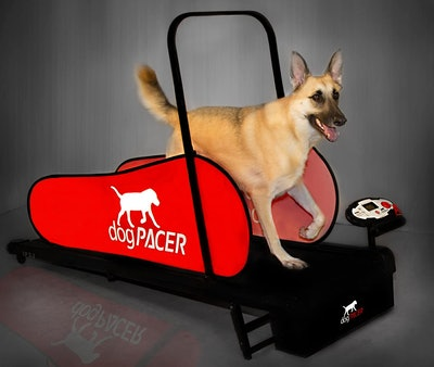 dogPACER Full-Size Dog Treadmill