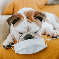 Can pets get Covid-19? What dog and cat owners should know now