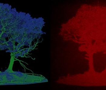 A LIDAR scan of a tree and a holographic representation of the scan.