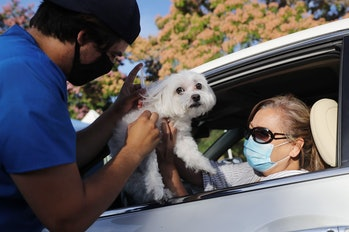 Dog receives vaccine at drive-through clinic during Covid-19