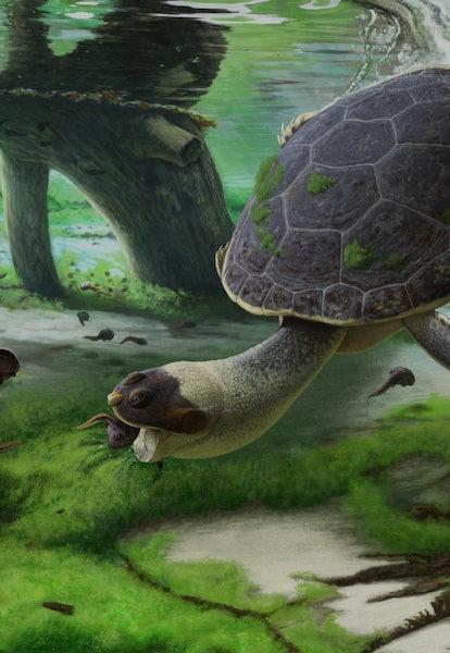 Life reconstruction of Sahonachelys mailakavava, preying upon tadpoles of the giant Madagascan frog Beelzebufo ampinga using specialized suction feeding.