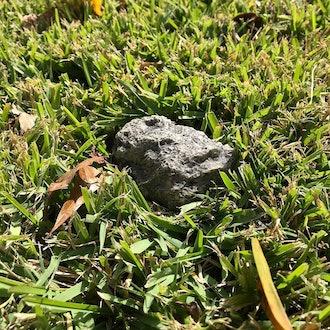 PANGAEA Fake Rock Key Hider