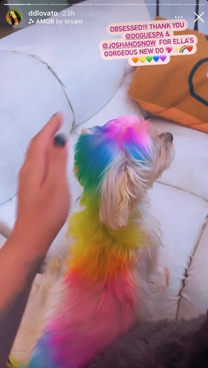 Demi Lovato's dog Ella with her fur dyed rainbow for Pride