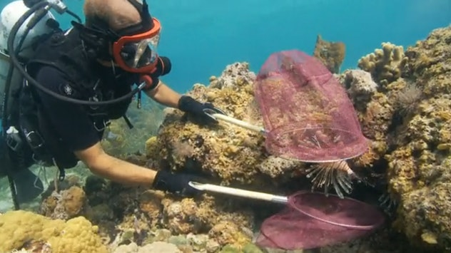 Saving the Ocean with Carl Safina is a documentary series that explores oceans around the world.