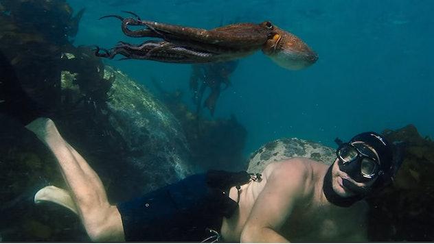 My Octopus Teacher won an Academy Award for Best Documentary Feature.