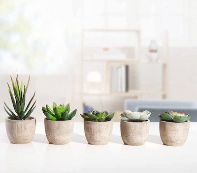 MoonLa Artificial Succulents (Set of 5)