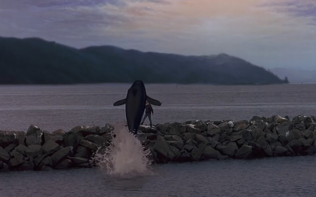 Free Willy is the original ocean movie for kids.