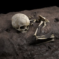 Inside the incredible journey to solve an ancient human mystery