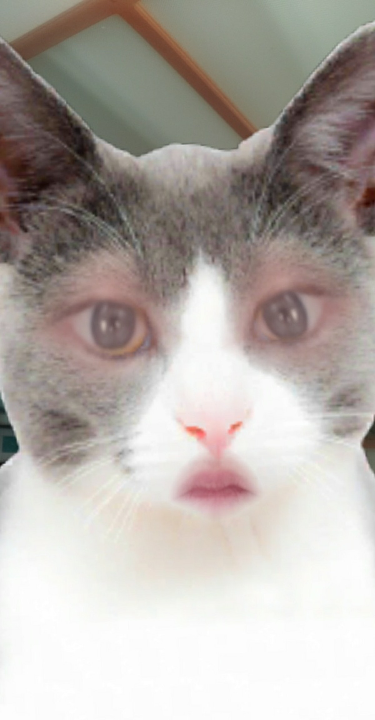 You can get a Snapchat cat face lens in a few easy steps.