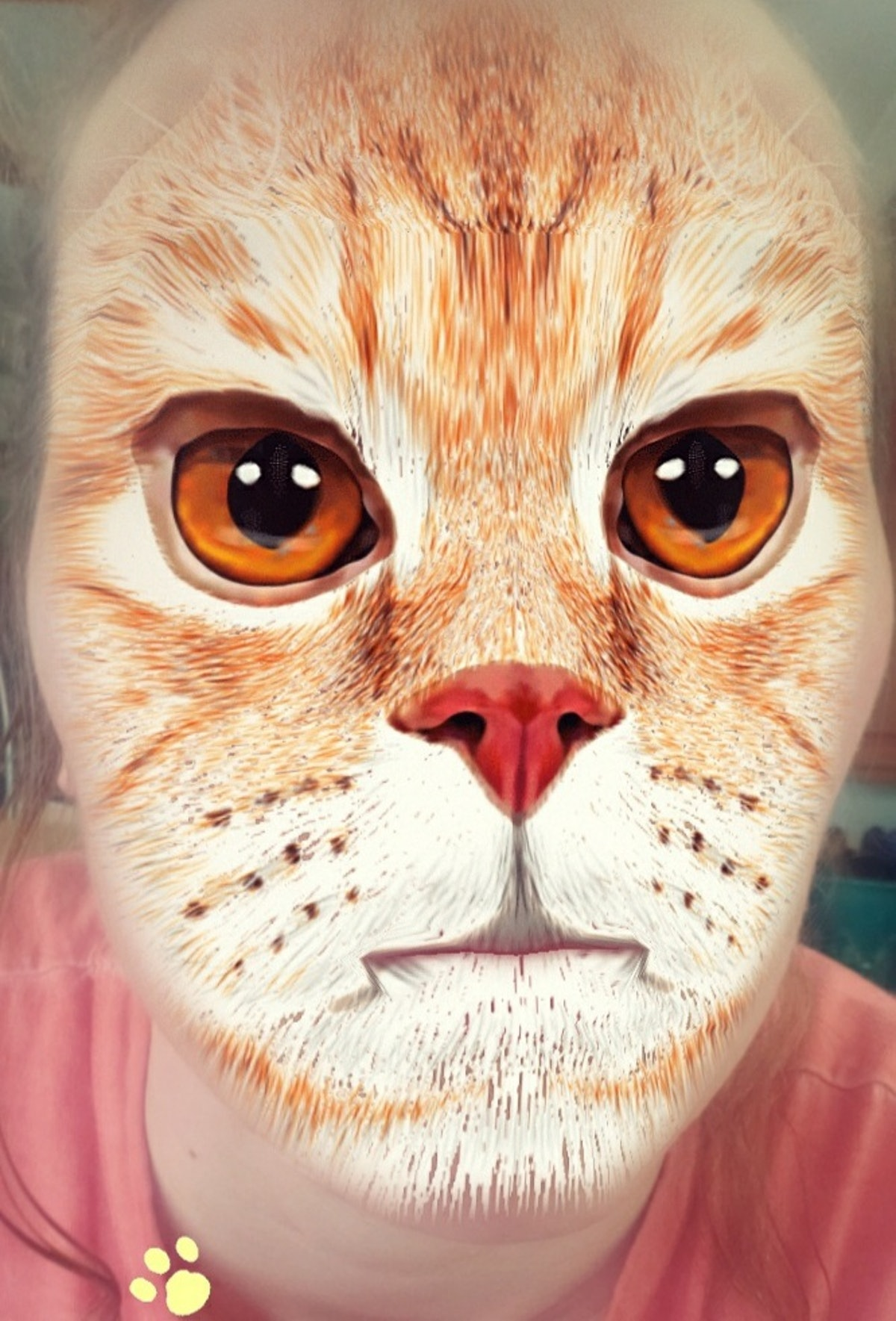 Here's how you can get a cat face filter on Snapchat to take funny vids.