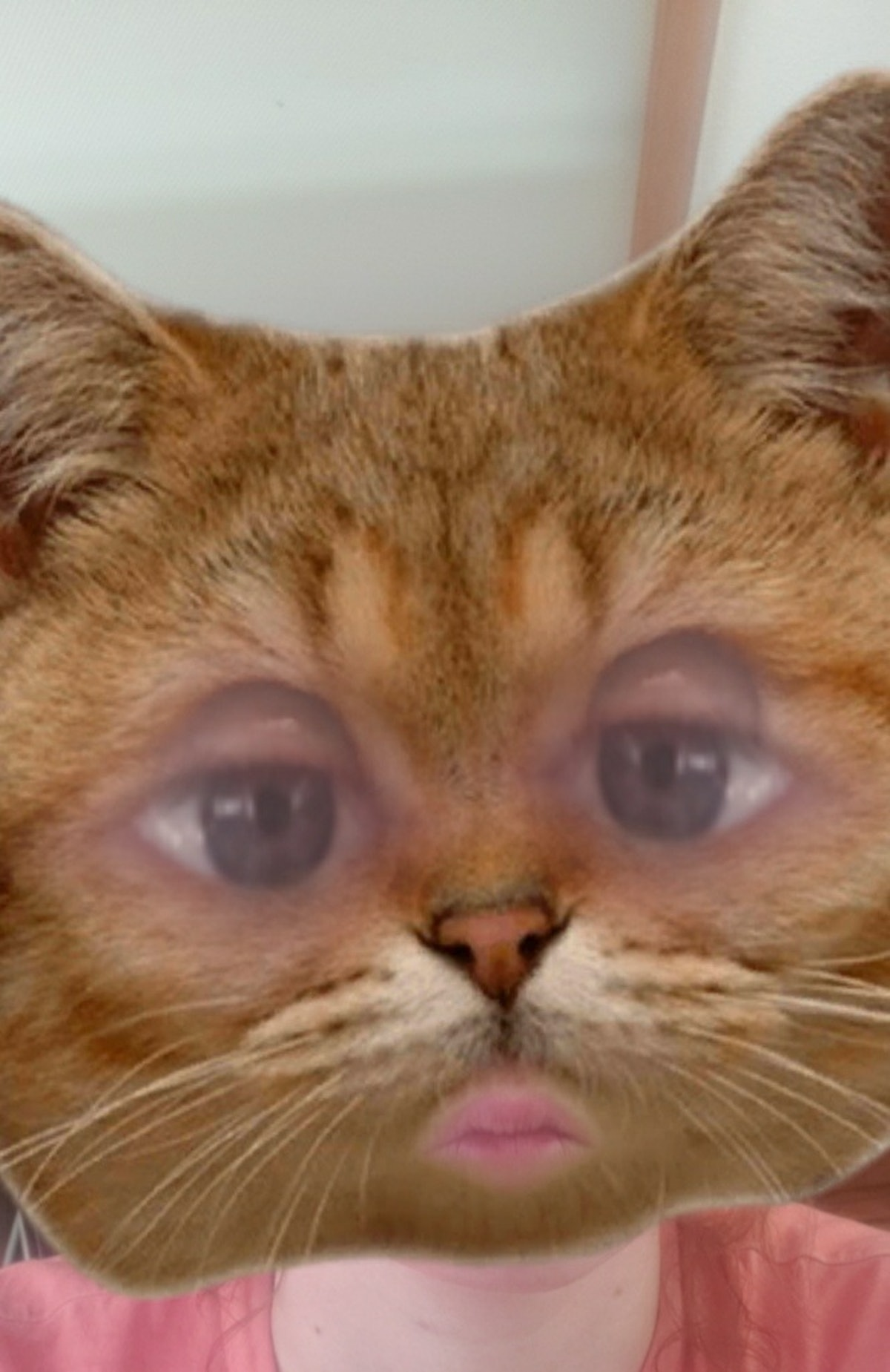 You can get a cat face filter on Snapchat from a few Lens creators.