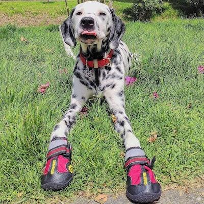 QUMY Waterproof Dog Boots