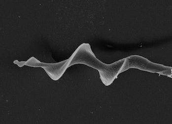Sperm helical shape