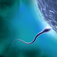 Is bigger always better? Scientists explain the evolution of sperm size