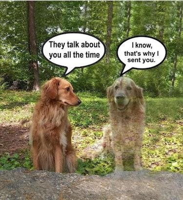 Sentimental dog meme from Facebook