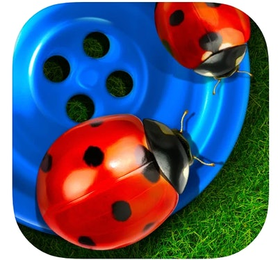 Bugs & Buttons