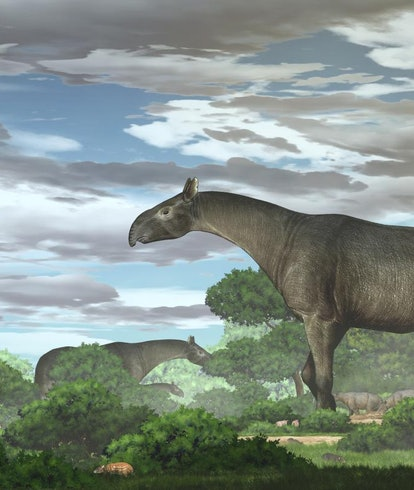 Ecological reconstruction of giant rhinos and their accompanying fauna in the Linxia Basin during th...