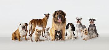 Dog group portrait multiple breeds