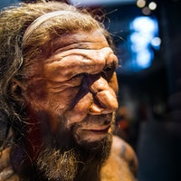 Ancient human discovery upends the history of Neanderthals and Homo sapiens