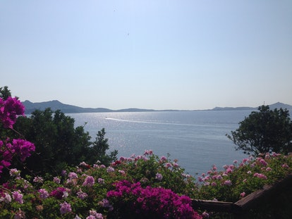 sea view of the Mediterranean sea with bougainvilleas