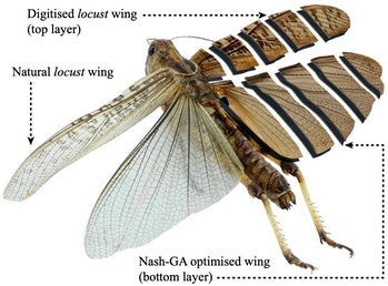 Digitized Locust Wings