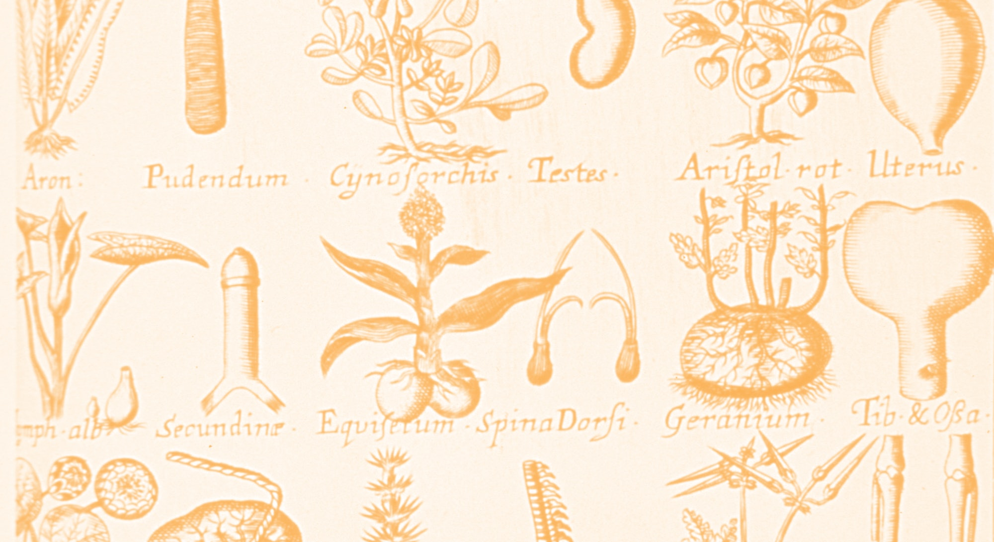 plants botany herbal remedies