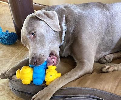 HOUNDGAMES Dog Puzzle Toys