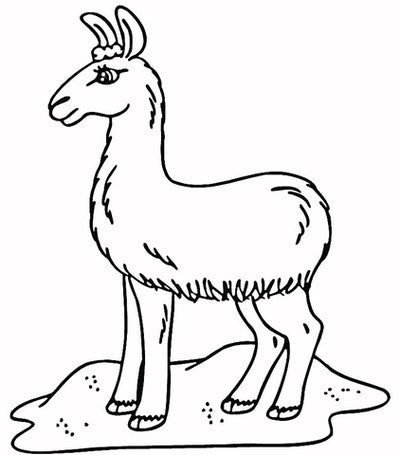 a kids coloring page featuring a cartoon llama with long eyelashes standing in sand