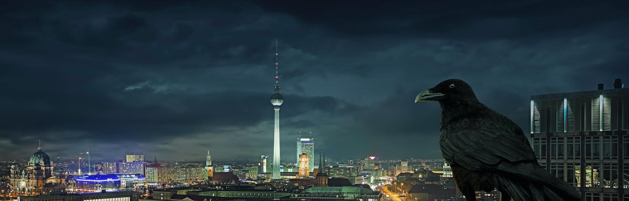 bird, night, Berlin