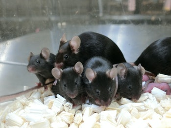 healthy space mice pups