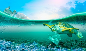 Sea turtle surrounded by plastic