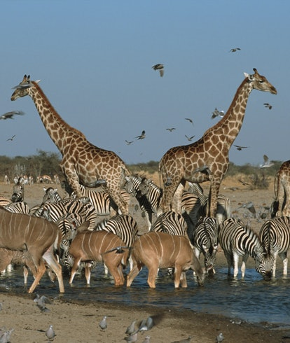 Animals at African watering hole