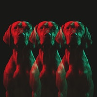 How to make your dog live longer: The science of canine longevity