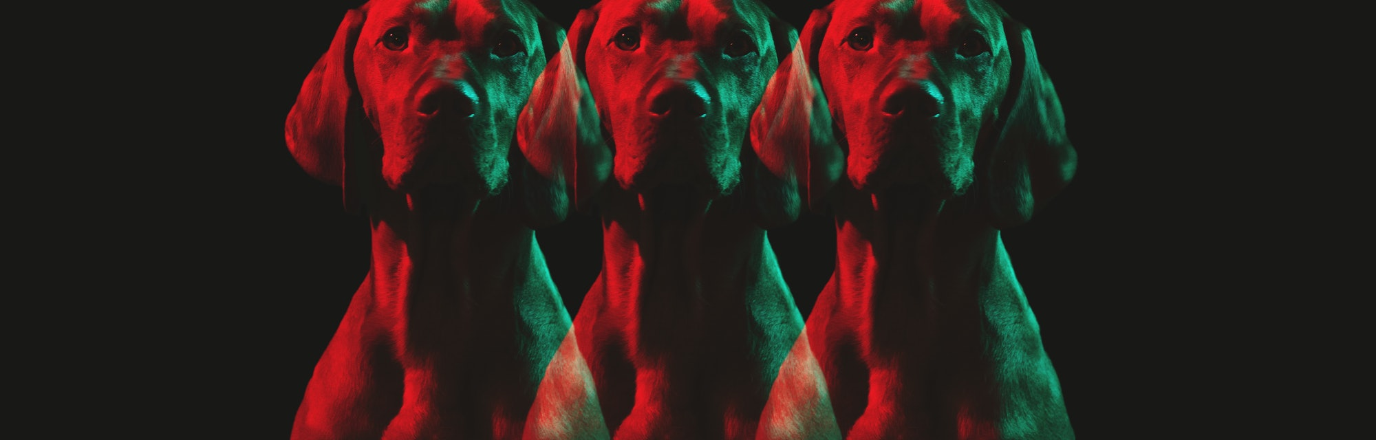 Multiple images of dog with red and green tint