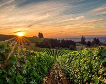 Willamette Valley in Oregon makes a great under-the-radar travel destination.