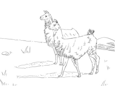 a kids coloring page featuring two llamas walking in a field