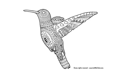 A Hummingbird Coloring Page For Adults