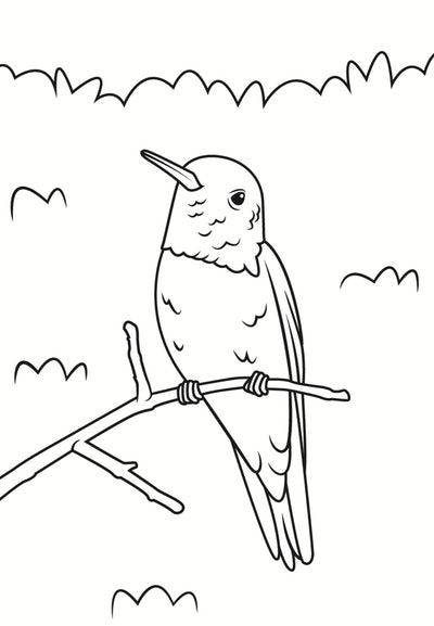 A Sitting Hummingbird Coloring Page