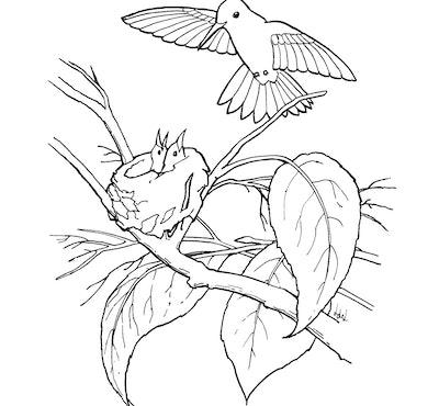 A Mama Hummingbird Coloring Page