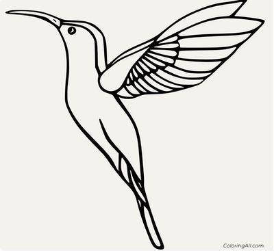 A Basic Hummingbird Coloring Page