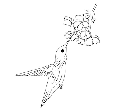 A Flowery Hummingbird Coloring Page