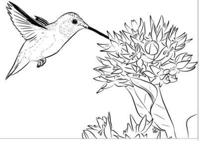 A Rufous Hummingbird Coloring Page