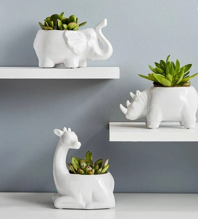 Safari Animal Succulents