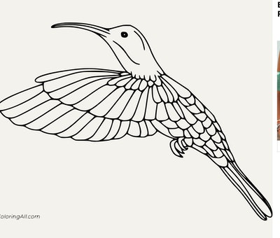 An In-Flight Hummingbird Coloring Page
