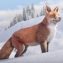 Red Dead Redemption fox in snow