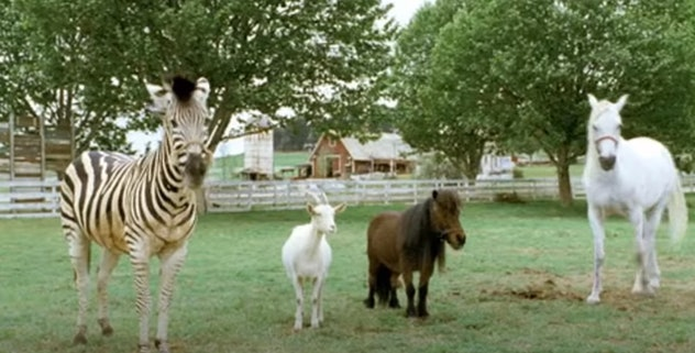 'Racing Stripes' is a movie from 2005.
