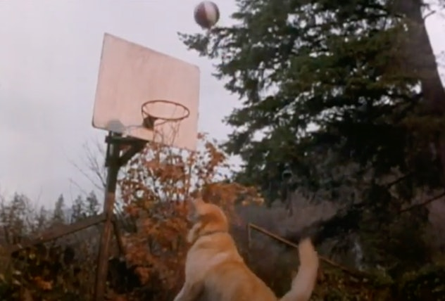 'Air Bud' is a film from 1997.